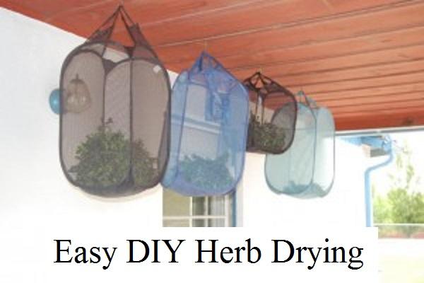 Easy DIY Herb Drying