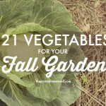 Vegetables For a Fall Garden