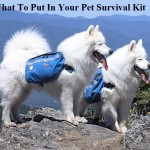 What To Put In Your Pet Survival Kit