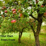 Grow Your Own Apple Trees From Seed