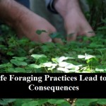 Unsafe Foraging Practices Lead to Dire Consequences