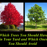 Which Trees You Should Have in Your Yard & Which Ones You Should Avoid