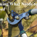 Knowing What Needs to be Pruned and When