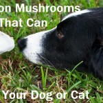 Common Mushrooms that can Poison Your Dog or Cat