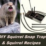 DIY Squirrel Snap Trap & Squirrel Recipes