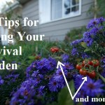Tips for Hiding Your Survival Garden