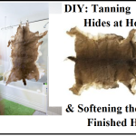 DIY: Tanning Hides at Home & Softening the Finished Hide