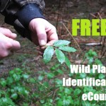 FREE Wild Plant Identification eCourse -Updated