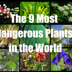 The 9 Most Dangerous Plants in the World