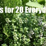10 Herbs for 20 Everyday Uses
