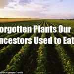 Forgotten Plants our Ancestors Used to Eat