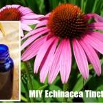 MIY Echinacea Tincture