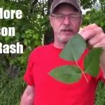 No More Poison Ivy Rash