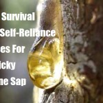 16 Survival & Self-Reliance Uses For Sticky Pine Sap