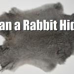 Tan a Rabbit Hide