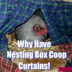 Why Have Nesting Box Coop Curtains