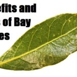 Benefits and Uses of Bay Leaves
