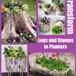 Transform Logs and Stumps to Planters