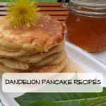 Dandelion Pancake Recipes