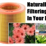 Naturally Filtering Air In Your Home