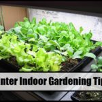 Winter Indoor Gardening Tips