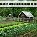 Start a Self-Sufficient Homestead on 1 Acre!