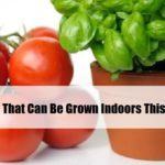 Edibles That Can Be Grown Indoors This Winter