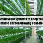 6 Small Scale Systems to Keep Your Vegetable Garden Growing Year-Round