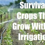 Survival Crops That Grow Without Irrigation