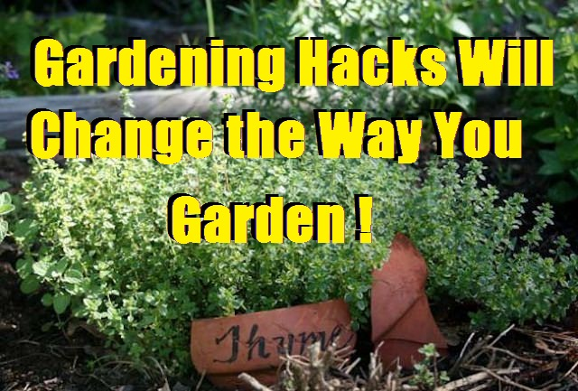 Gardening Hacks Will Change the Way You Garden!