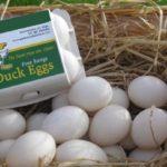 Benefits of Duck Eggs