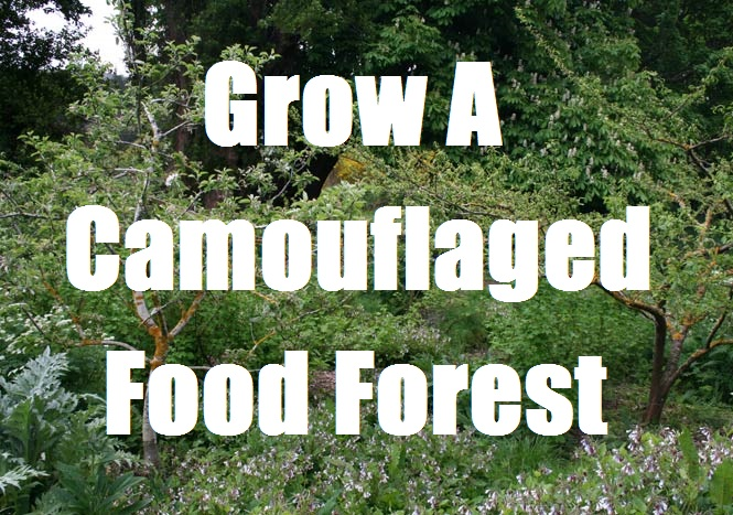 Grow A Camouflaged Food Forest