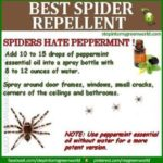 Natural Bug Repellents – Infographic