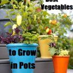 Best Vegetables to Grow in Pots