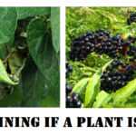 Determining If A Plant Is Edible
