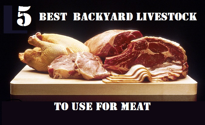5 Best Backyard Livestock to Use for Meat