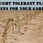 Drought Tolerant Plants & Trees for Your Garden
