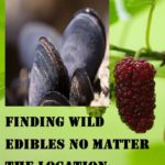 Finding Wild Edibles No Matter The Location