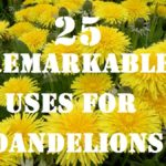 25 Remarkable Uses for Dandelions