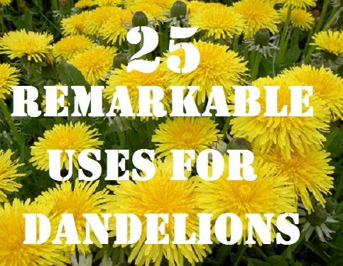 25 Remarkable Uses for Dandelions