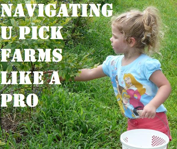 Navigating U Pick Farms Like a Pro