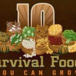 10 Survival Foods You Can Grow Infographic
