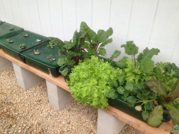DIY Kratky's Passive Gardening System