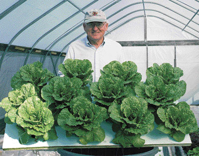 The Kratky Method for Passive Gardening