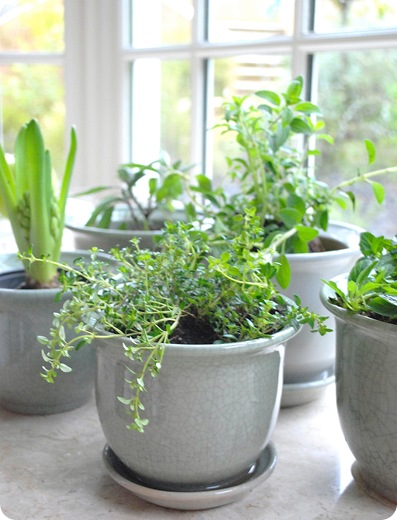 Indoor vegetable garden the prepared page for Indoor vegetable gardening beginner